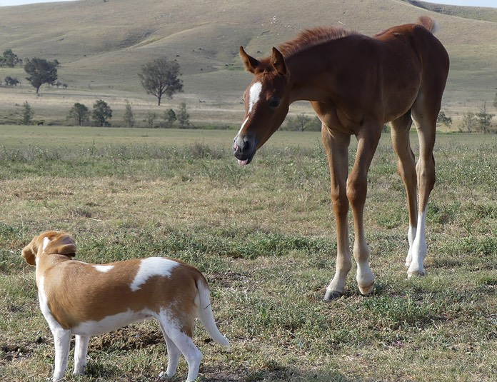 Charlies Filly and Gretel