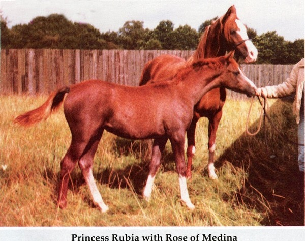 princess-rubia-with-rose-of_med-2